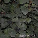 DSC_5243