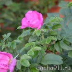DSC_5291
